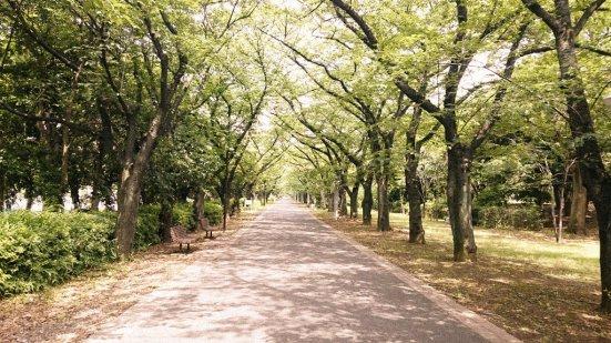 Tatsumi_no_Mori_Green_Park_sakuratree